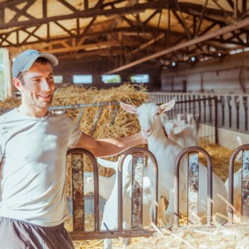 Ludovic Gazengel : Les Fromages de l'Angle Giraud